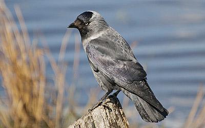 fåglar bilder ljud